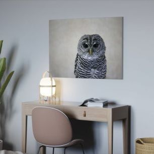 オーダーアートパネル PHOTOWALL / Portrait of an Owl (e24357)