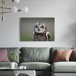 オーダーアートパネル PHOTOWALL / Short-Eared Owl (e24747)