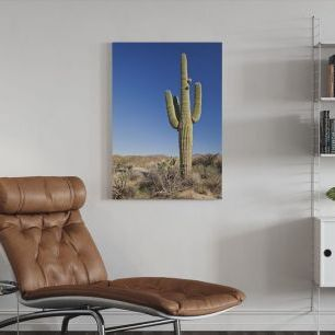 オーダーアートパネル PHOTOWALL / Saguaro Cactus in Desert (e24801)
