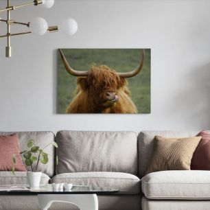 オーダーアートパネル PHOTOWALL / Highland Cattle (e310536)