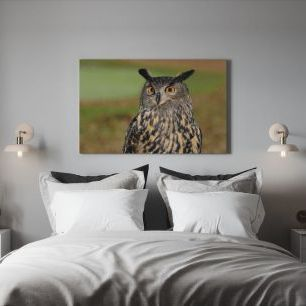 オーダーアートパネル PHOTOWALL / European Eagle Owl (e310664)