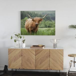 オーダーアートパネル PHOTOWALL / Highland Cattle (e320152)