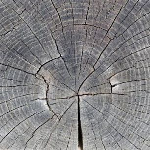 輸入壁紙 カスタム壁紙 PHOTOWALL / Tree Trunk Showing Growth Rings (e19113)