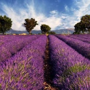 輸入壁紙 カスタム壁紙 PHOTOWALL / Lavender Field in Provence (e19149)