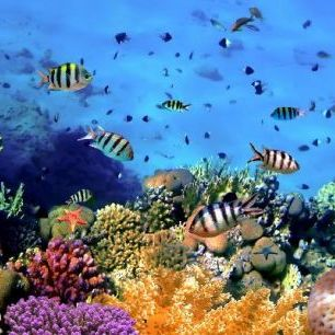 輸入壁紙 カスタム壁紙 PHOTOWALL / Coral Reef at Koh Cahg Island (e20416)