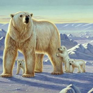輸入壁紙 カスタム壁紙 PHOTOWALL / Polar Bear with Cubs (e21708)