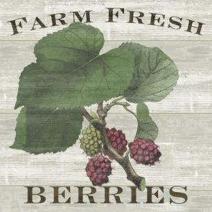 輸入壁紙 カスタム壁紙 PHOTOWALL / Farm Fresh Raspberries (e25641)
