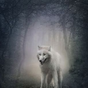 輸入壁紙 カスタム壁紙 PHOTOWALL / White Wolf in the Night Forest (e40710)