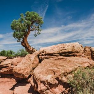 輸入壁紙 カスタム壁紙 PHOTOWALL / Desert tree in Utah (e50271)