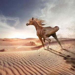 輸入壁紙 カスタム壁紙 PHOTOWALL / Running Horse in the Desert (e310662)