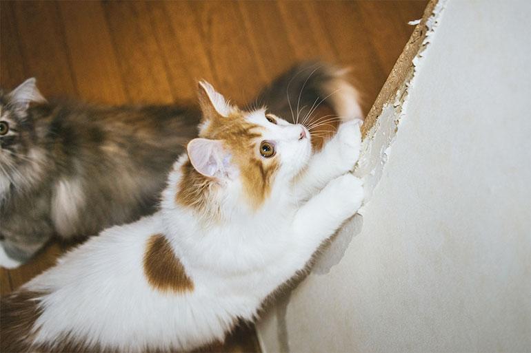 猫 画像 まとめ