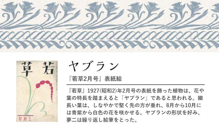 『若草2月号』 ヤブラン